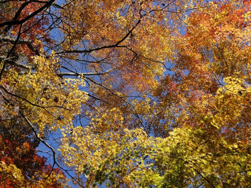 Autumn Colours galore