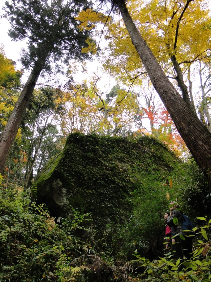 Huge moss covered boulders