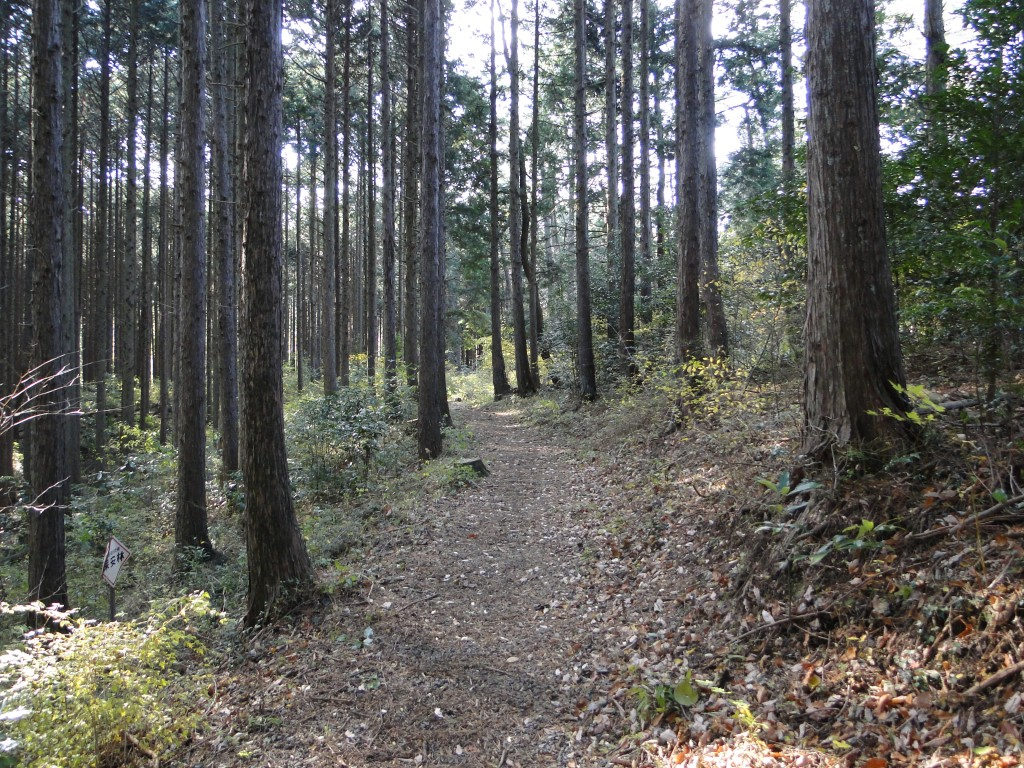 A great forest path
