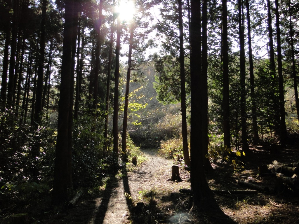 The path to Mt Maku