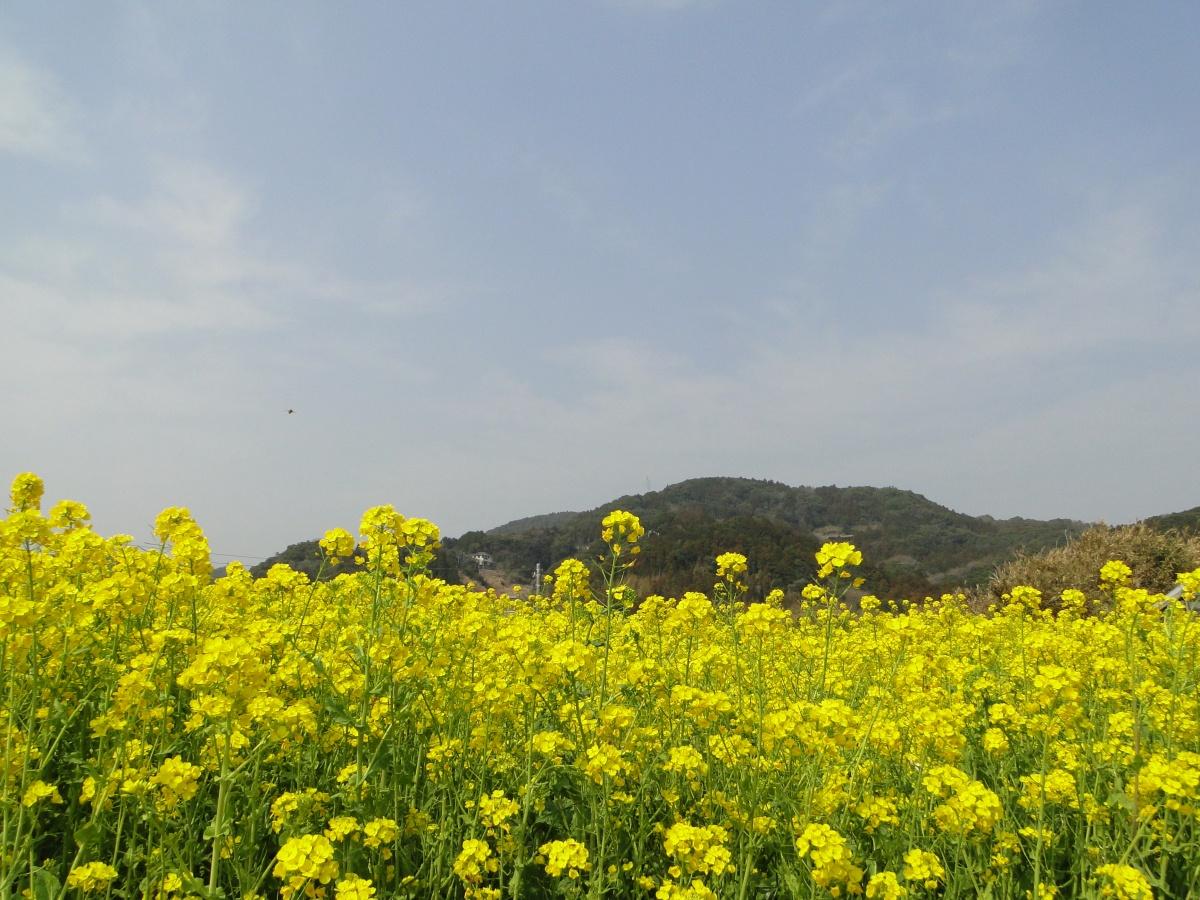 Mt Karasuba (267m) & Mt Konpira (121m), Kamogawa City, ChibaPrefecture