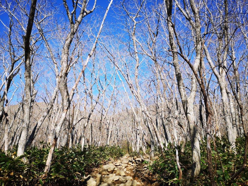 Hiking in Tohoku: Mt Izumigadake (1175m), Miyagi Prefecture, November2020
